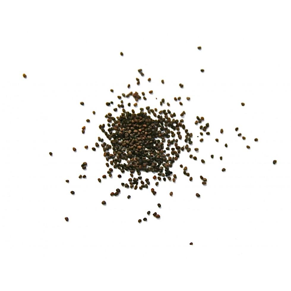 semences de tabac vari t rouge fort. Black Bedroom Furniture Sets. Home Design Ideas