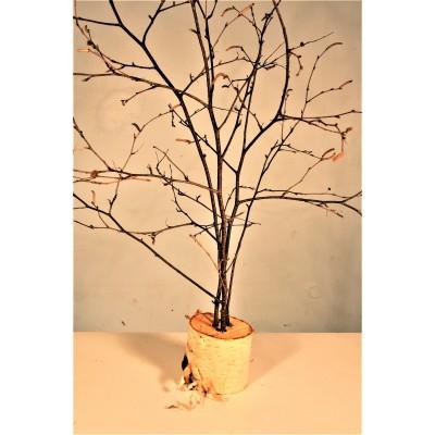 Branches de Noël minimalistes (Feuillu)